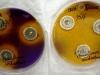 Penicillium viridicatum culture media